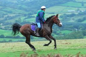Контроль аллюра (движения лошади)