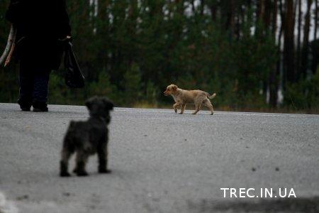 TREC-UA 2017.10.21. Ориентирование. Часть3.Фото Марии Кравец.